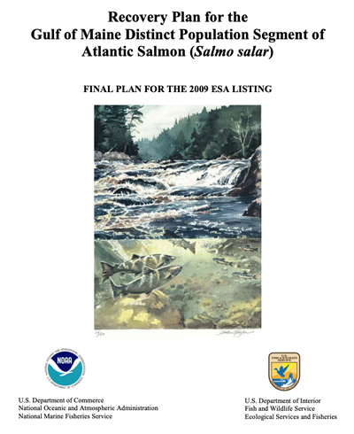 NOAA and USFWS Release Atlantic Salmon Recovery Plan