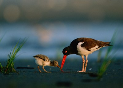 North Atlantic LCC works with states to identify Northeast conservation priorities