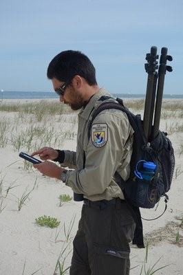Shorebird science? There's an app for that