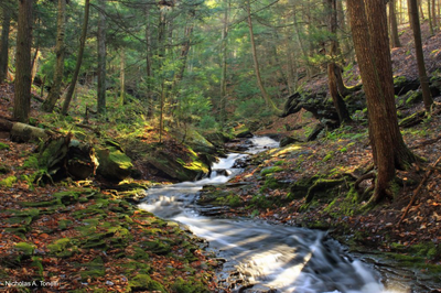 Partners launch 'Nature's Network' to guide conservation from Maine to Virginia