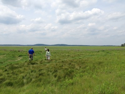 Translating science into a sustainable future for the Great Marsh