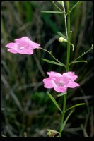 Prioritizing Plant Species for Conservation