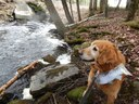 """Bailey and the salmon are checking out an arch culvert with a natural bottom, set at the right elevation to be more or less """"invisible"""" to aquatic organizisms moving through it!"""