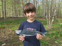 Striped bass are another sea run fish which migrates in the big rivers of Maine