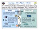 Text and diagram illustration the life cycle of Atlantic salmon.