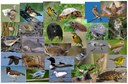 Wildlife Species Models