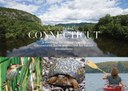 Connect the Connecticut Report